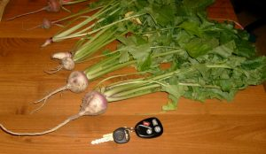 Turnips! (And car keys for scale)