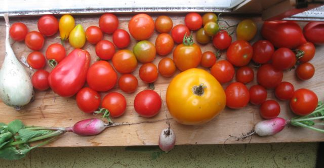 Onion, tomatoes, and radishes